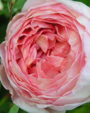 Beratung Blumengärten Rabatten Naturnahe Gärten Saisonale Bepflanzungen Standort Bestimmung