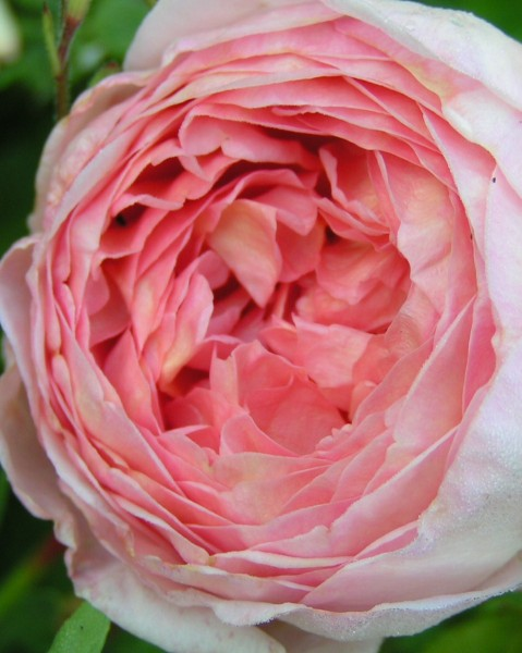 Gartenberatung-Blumen-Pflanzen