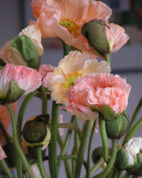 Raumgestaltung mit Blumen und Pflanzen